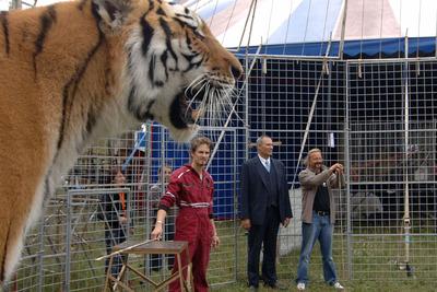 Plzeň málem přišla o primátora. Vlezl do klece s tygry